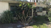 2102 Carroll Pl. Tampa, FL 33612